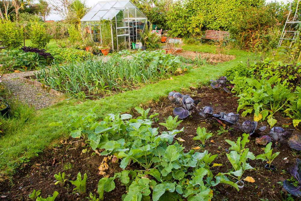 Tips for increasing garden productivity